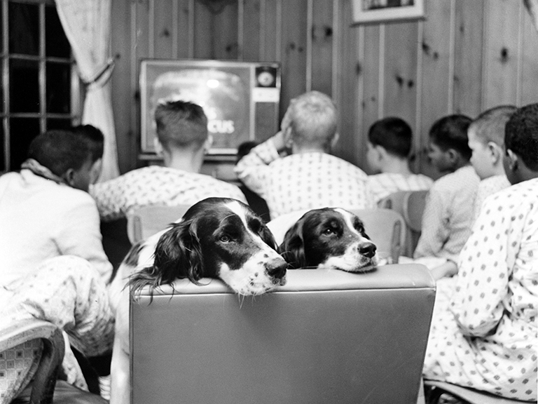 A group of young men watching television while a dog sits behind them.