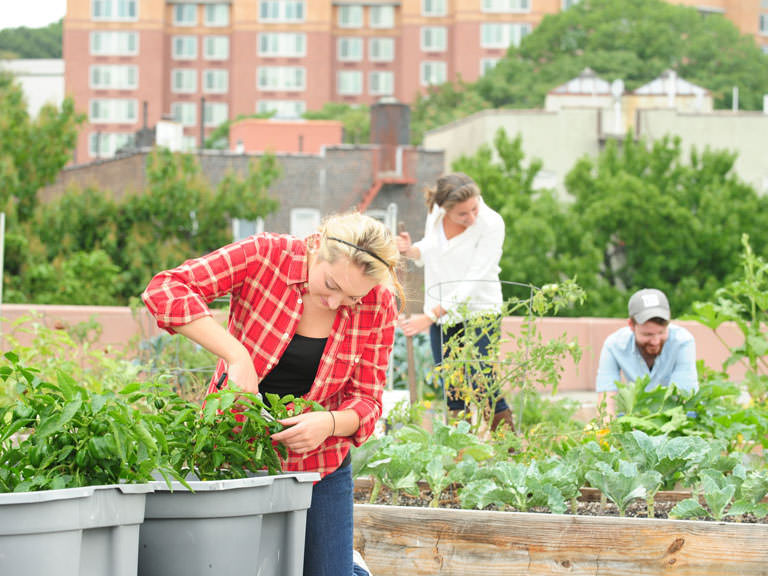 Students tend to plants on the rooftop garden.