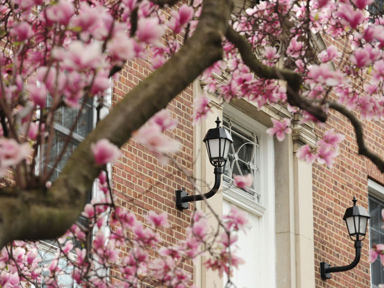 Flowering trees located on Manhattan College's idyllic campus, home to the oldest Peace Studies program in the nation.