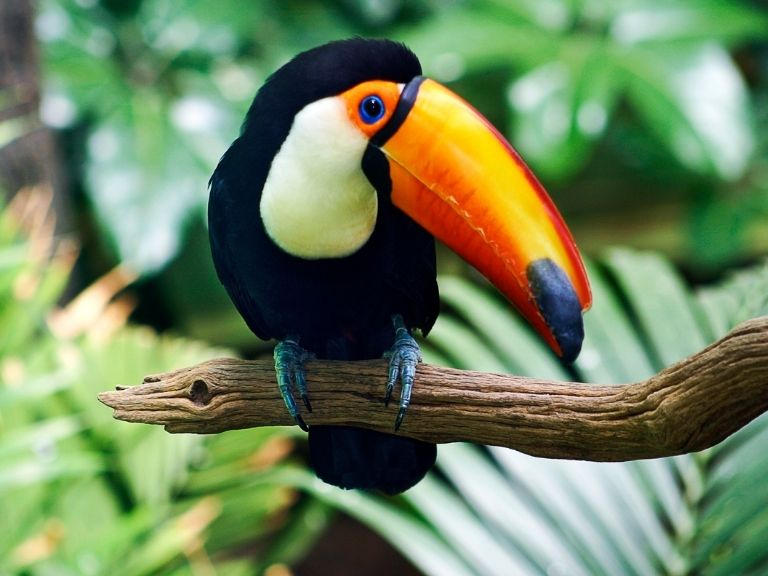 brightly colored toucan bird sitting on green leaf