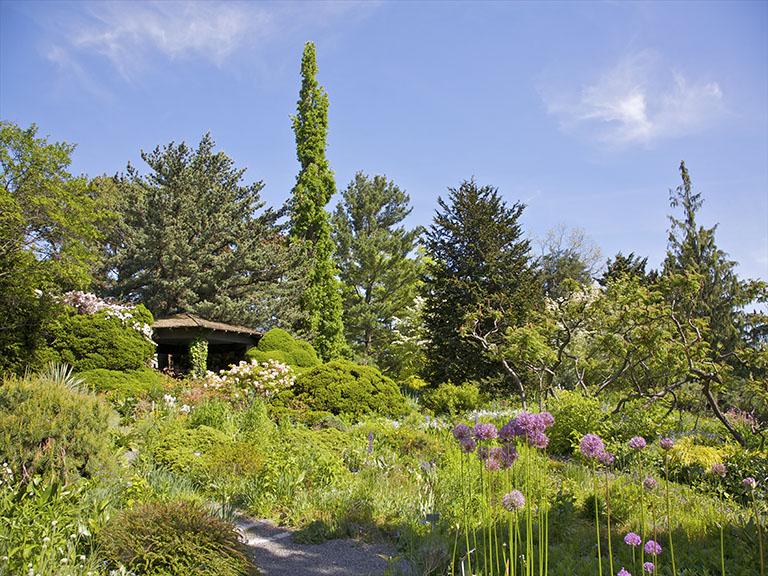 flowering green landscape